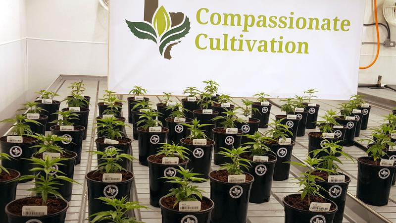 Compassionate Cultivation, the second medical marijuana dispensary in Texas, is set to open in early 2018.