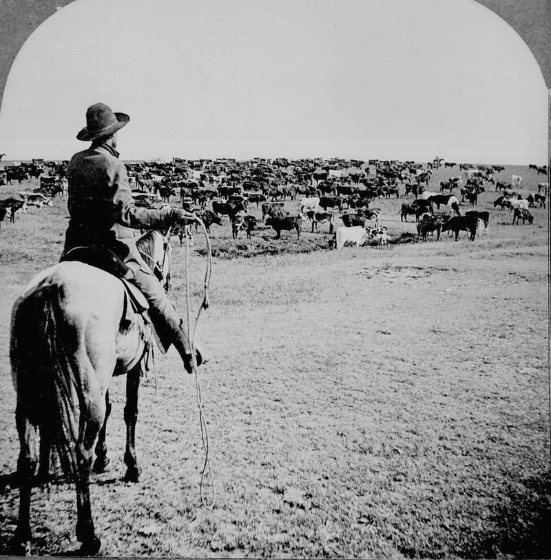 "On this episode of ""Texas Matters"" we look at the economy of cattle drives."