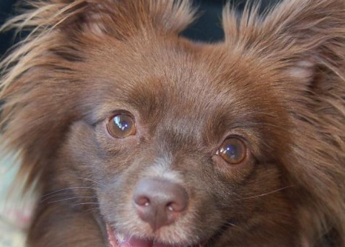 Pa pets low cost spay neuter assistance program