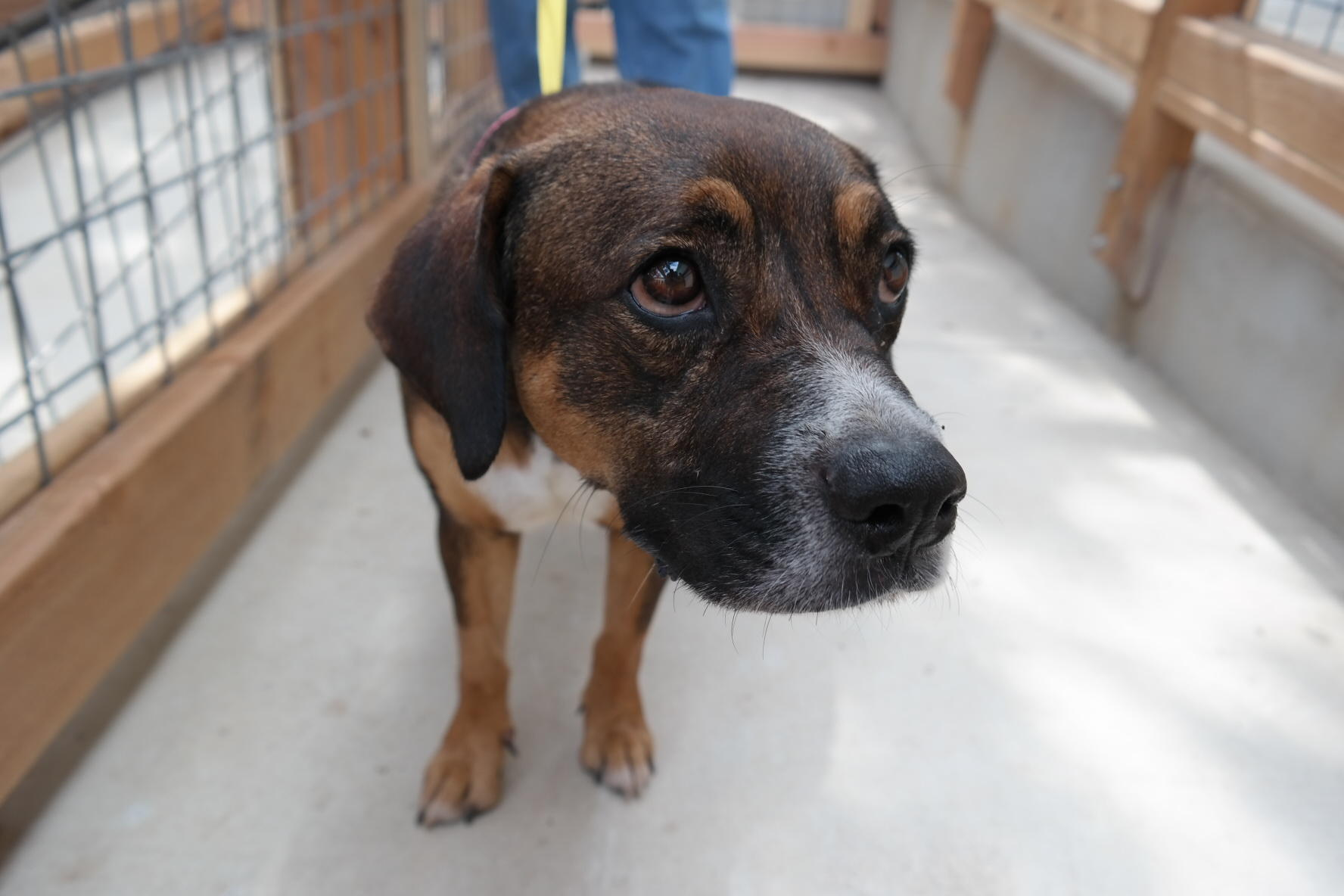 Newest Pet Adoption Center In San Antonio Sets Ambitious