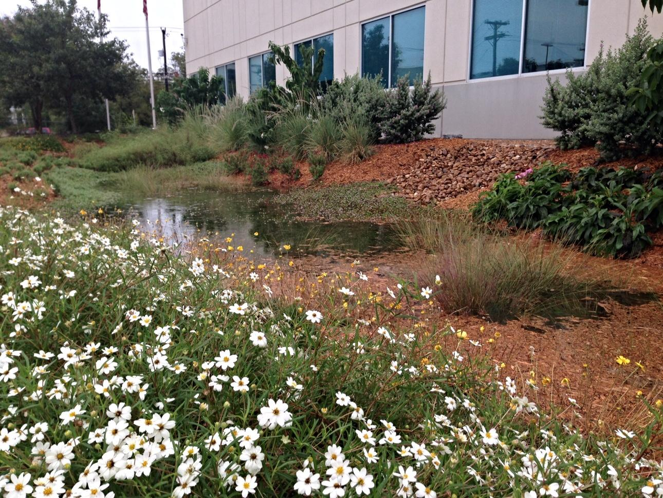 You Dont Need To Live In Seattle To Have A Rain Garden Texas