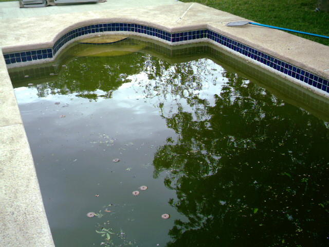 Laredo braces for zika outbreak texas public radio for Can mosquitoes breed in swimming pools