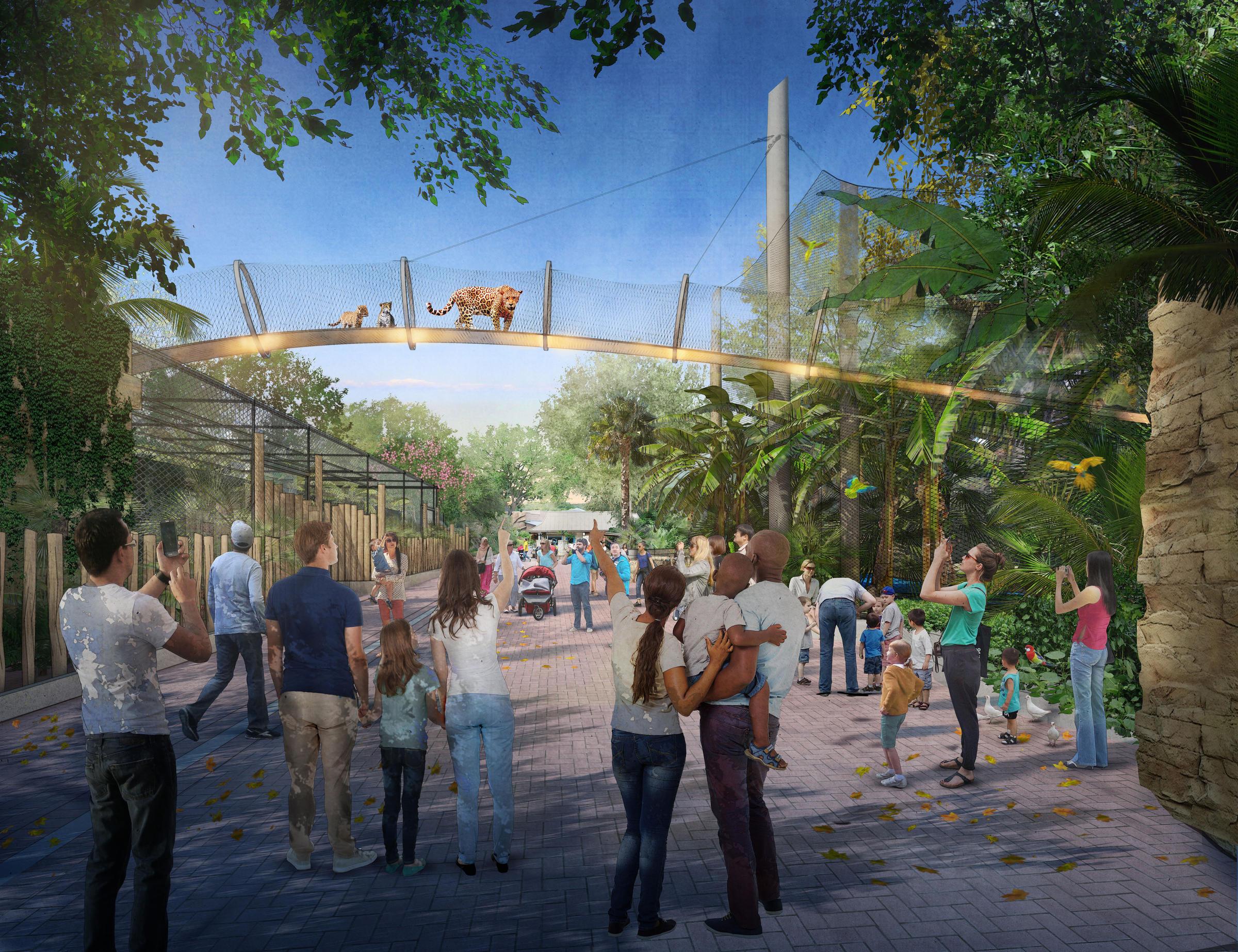 Jaguar San Antonio >> San Antonio Zoo To Build Unique Jaguar Habitat Texas Public Radio