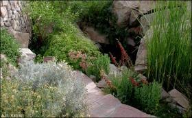 Chihuahuan Desert Gardens