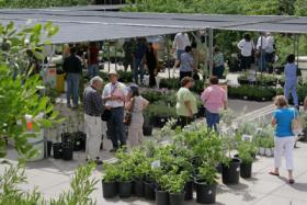 File photo from 2009 plant sale