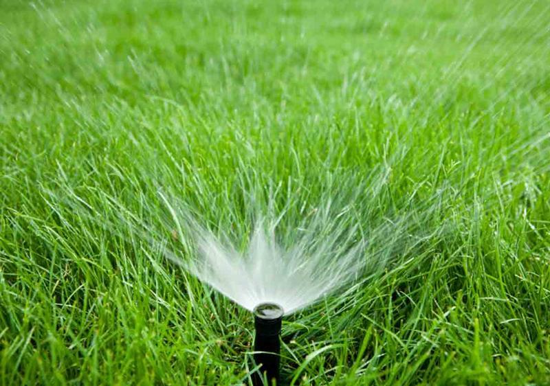 how to grow good grass