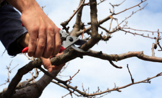 Creative Tree Pruning - The Rules Don't Always Apply