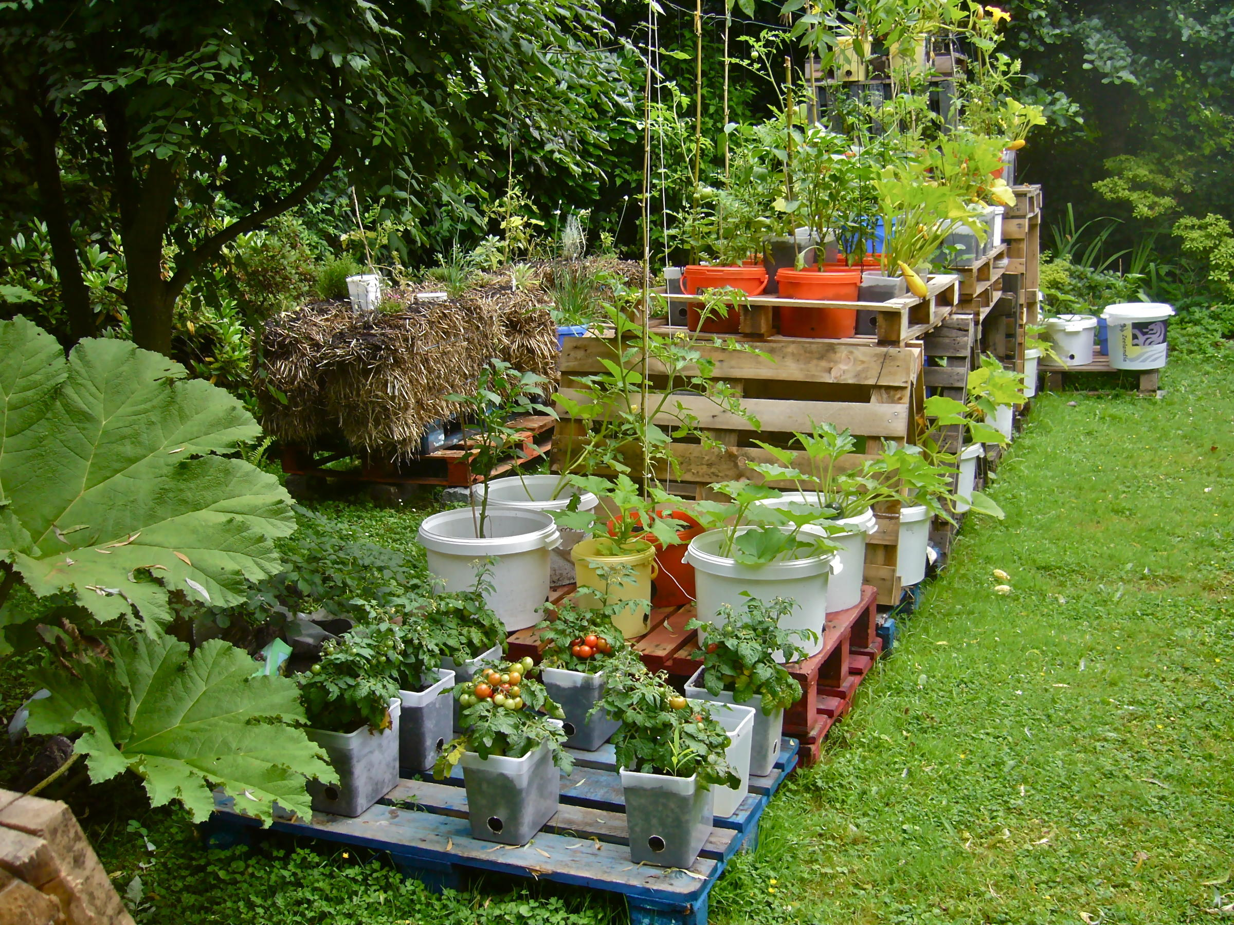 Hosts Denise Rodriguez And Jan Petrzelka Talk All About Container Gardening.  From Selecting Your Container And Choosing Your Plants, Denise And Jan  Discuss ...