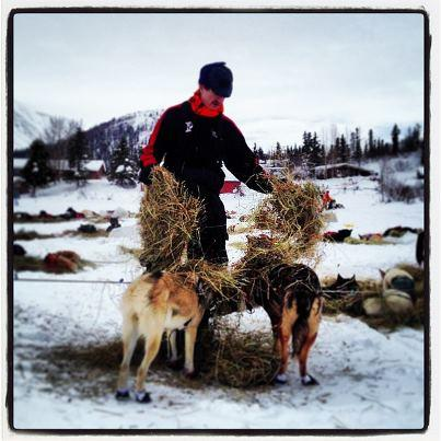 2013 Yukon Quest Champion Allen Moore beds down his dogs in Rainy Pass