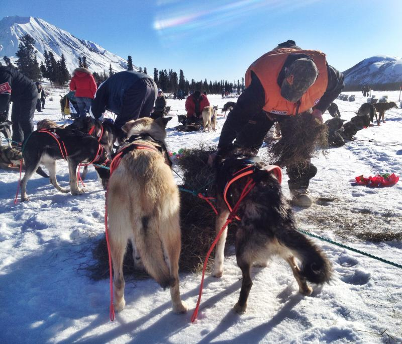 Jake Berkowitz was glad to arrive in Rainy Pass after he broke both his gang line and his sled.
