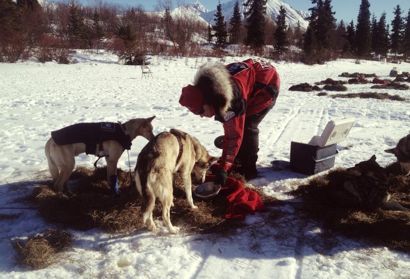 Aliy Zirkle snacks her dogs before taking off for the Dalzell Gorge