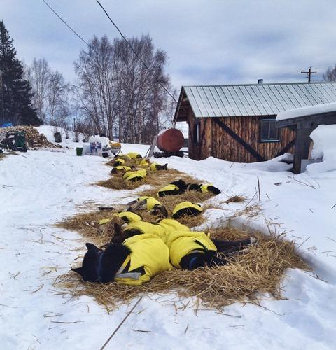 Hans Gatt's team rests for 24 hours in Takotna