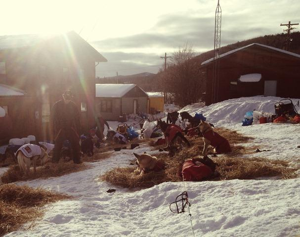 Many mushers shoose to take their mandatory 24 hour rest in Takotna.