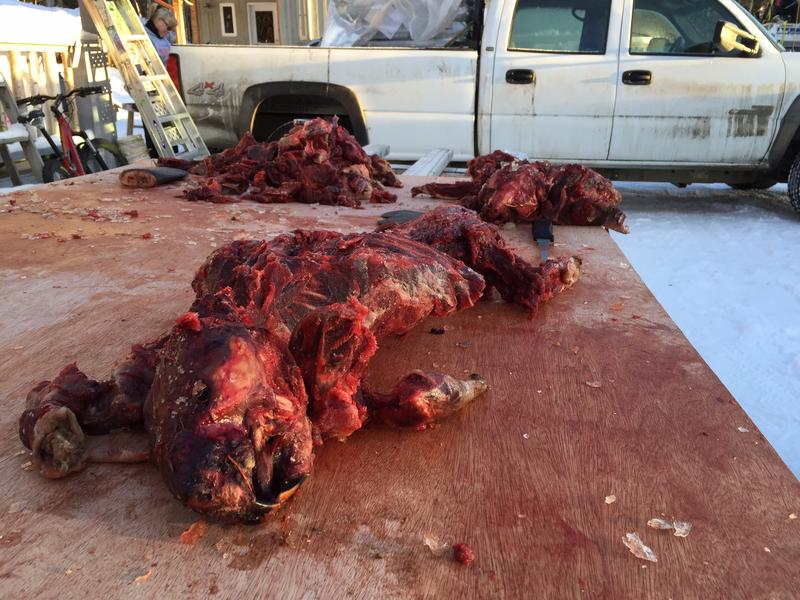Many drop bags are packed with beaver meat and other meat snacks hand butchered by mushers
