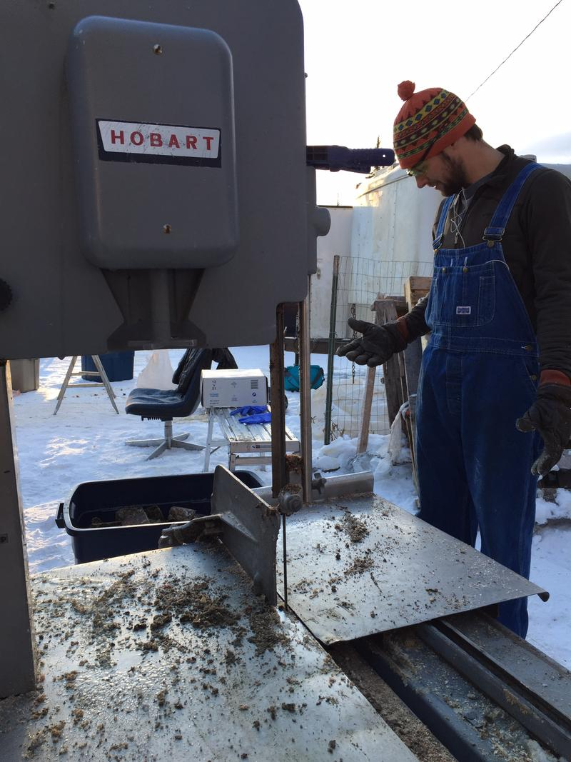 Friend Matt Cameron volunteered to use a meat saw to slice frozen tripe for sled dogs