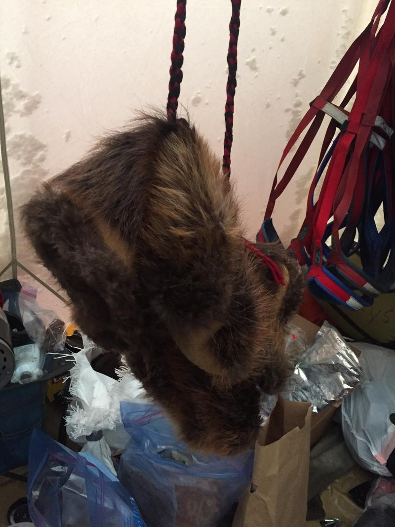A pair of beaver mitts hangs to dry inside a mushers' wall tent.