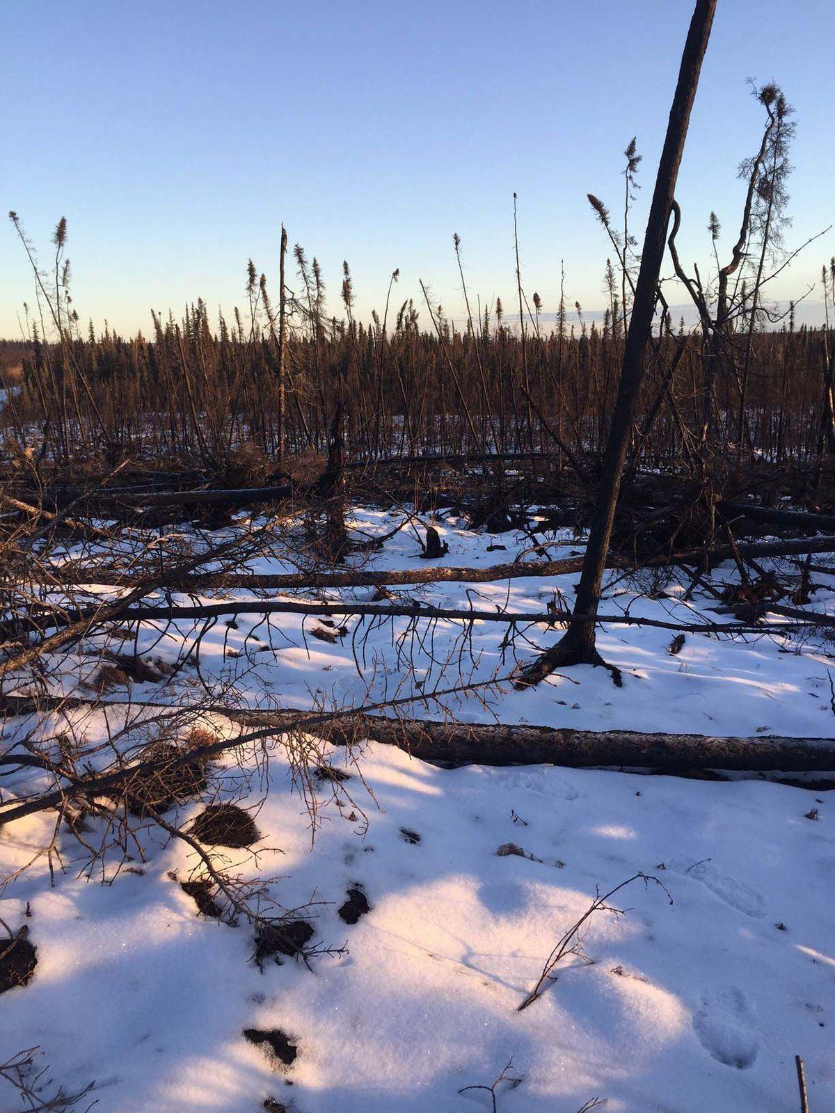 New report recounts alaskan subsistence hunters 39 climate for Brinkman s fishing report