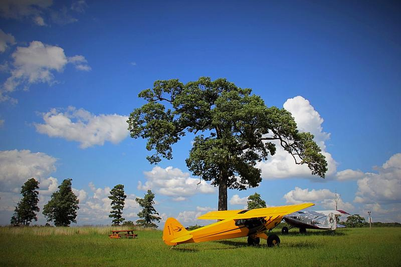 Planes parked under a tree at the Trigger Gap backcountry airstrip.