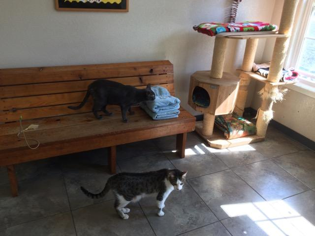 Cats prowl inside the lobby of shelter headquarters.