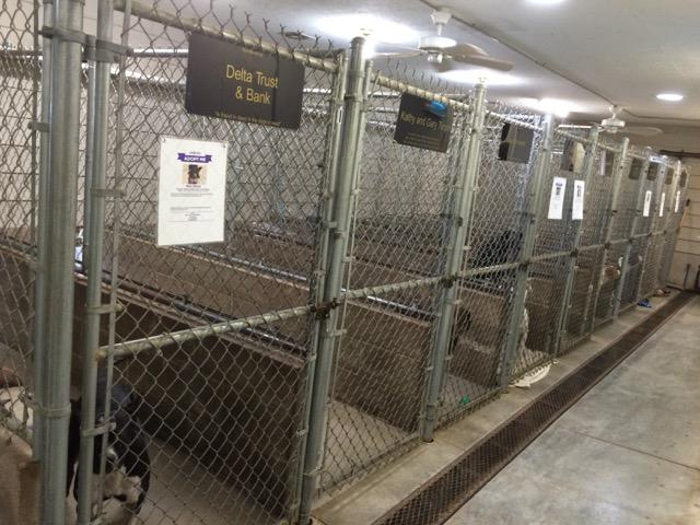 Dogs stay in secure pens, attached to outdoor dog runs.