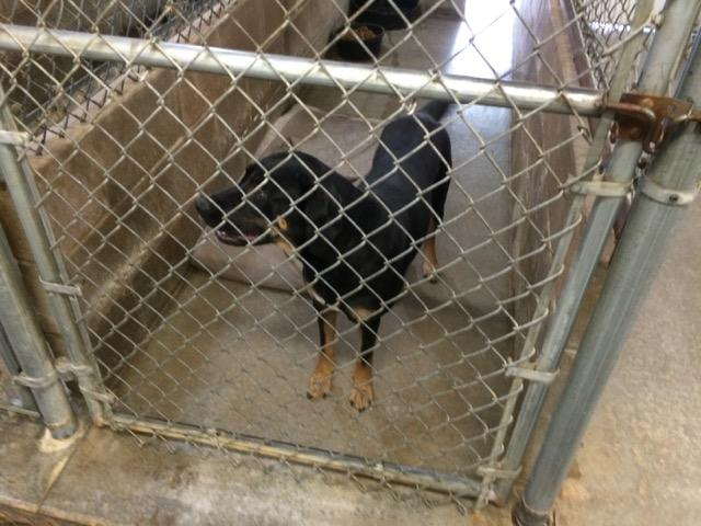 This mixed-breed shepherd is seeking a loving family.