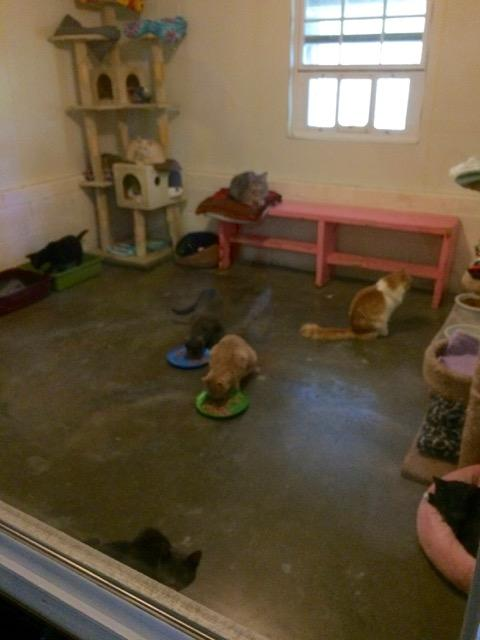 The Red Room for adult cats, available for adoption.