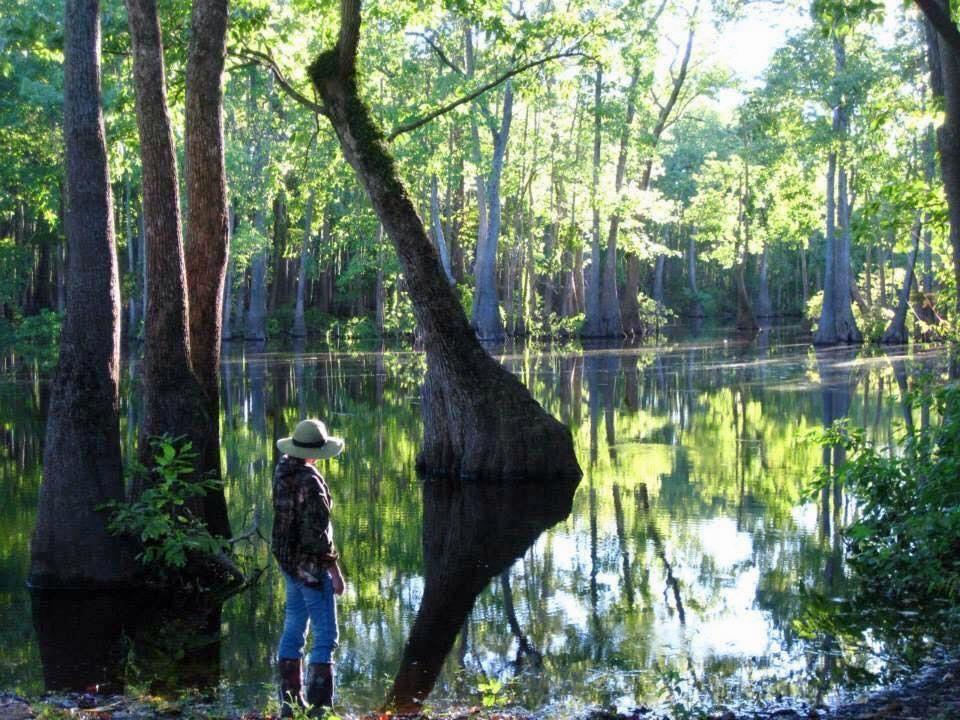 State wildlife agency new nonprofit blaze arkansas water trails kuaf arkansas water trails partnership founder and director debbie doss at bayou deview one of 13 declared water trails freerunsca Gallery