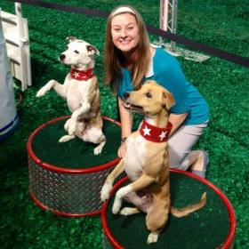 Darbi and two show dogs.