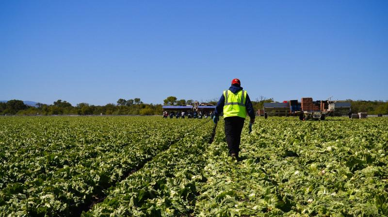 American farms are facing a dwindling supply of farm workers.