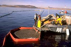 Harvesting raw biomass material by private companies most of which are in the cooperative called Great Salt Lake Artemia.