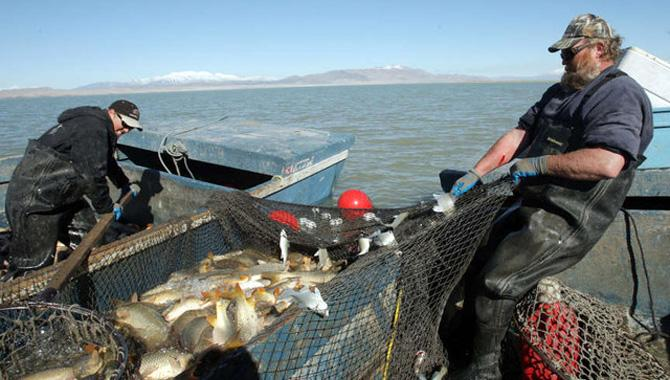 Fisherman Bill Loy and his crew removing carp from Utah Lake