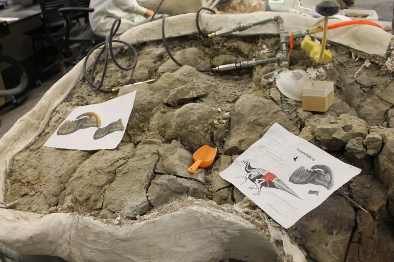 Some fossils researchers brought back from Southern Utah on their latest expodition.