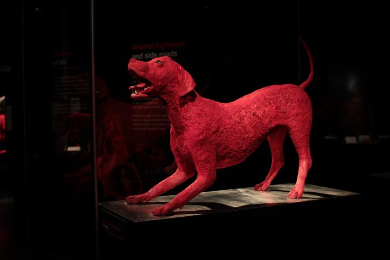The circulatory system of a dog at the Animal Inside Out exhibit