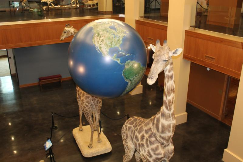 A pair of mounted giraffes flank a world globe at the entrance of the Monte L. Bean Life Science Museum at Brigham Young University