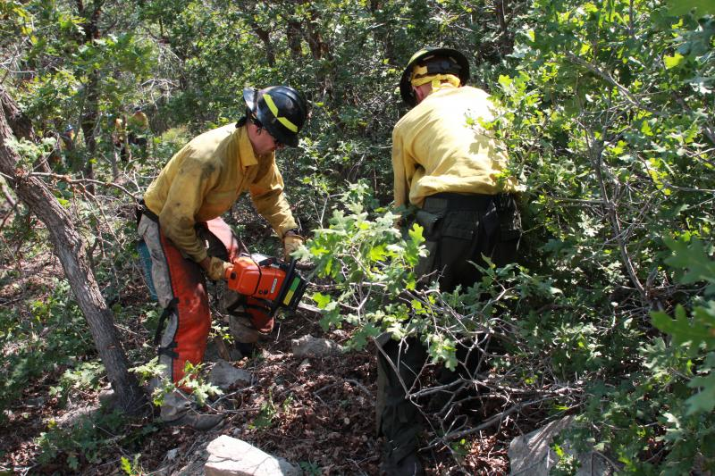 UFA fire fighters thin out oak brush on Traverse Mountain