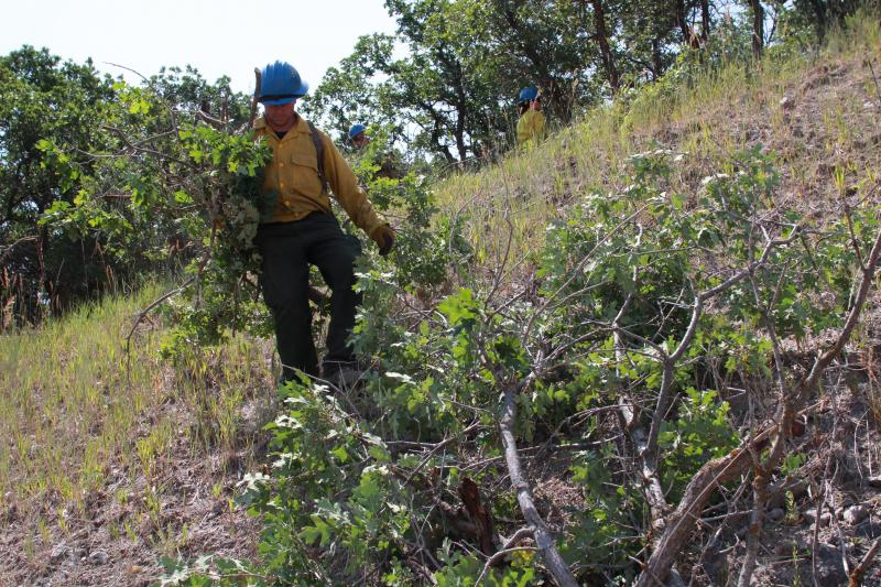 UFA fire fighter clears away brush on Traverse Mountain
