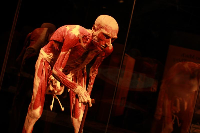 An old man at the Body Worlds & The Cycle of Life exhibit at The Leonardo Museum