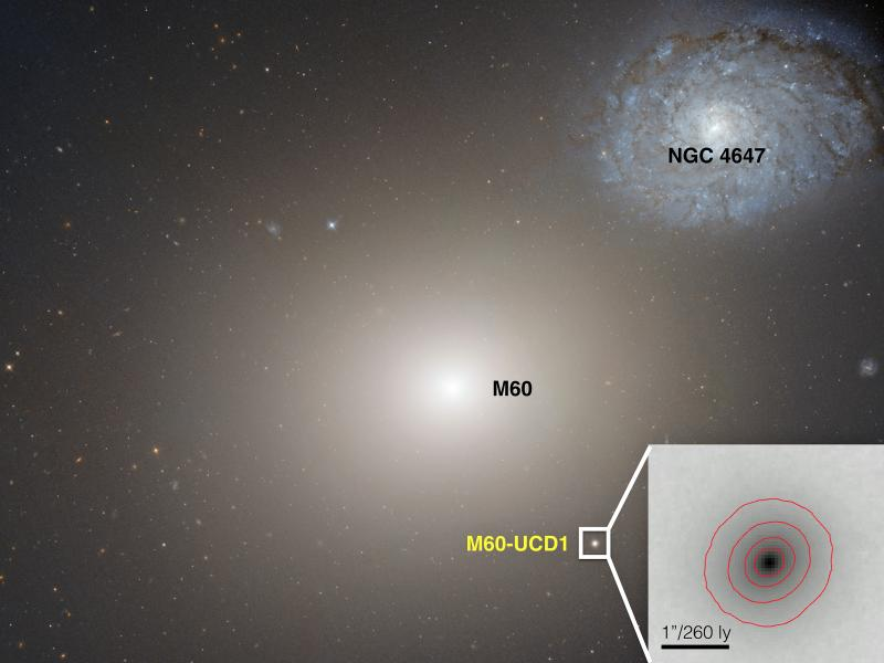 M60-UCD1 is the ultracompact dwarf galaxy where astronomers found a supermassive black hole