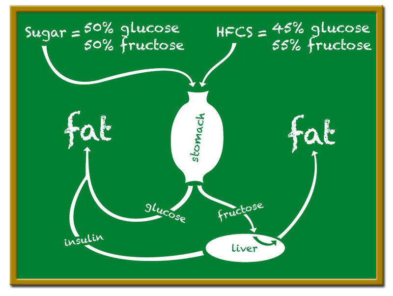 Sugar cycle of table sugar compared to high-fructose corn syrup.