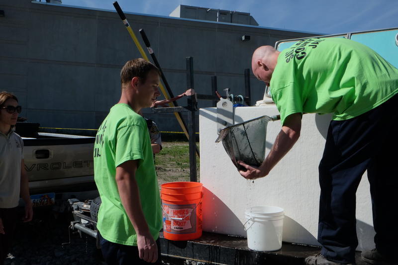 Salt Lake County jail inmates fill buckets with least chub to release into the pond.