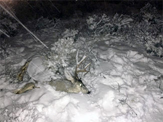 Poached deer in Tooele County that led to the arrest of two men on January 7, 2016
