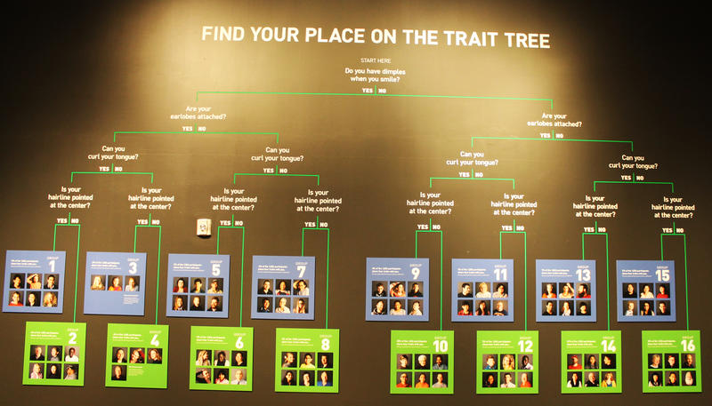 "Trait Tree, part of ""Genome, Unlocking Life's Code"" at the NHMU."