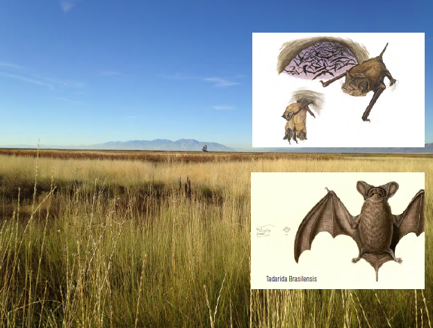 Architects are drawing up designs for a new bat condo complex at the Great Salt Lake Shorelands Preserve. The idea is to help bats find a home because their habitat is being destroyed by human development.