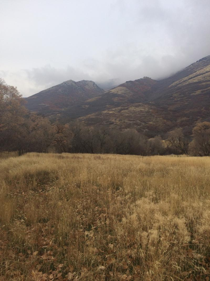 A view of the property that is now being referred to as Owl Meadow.