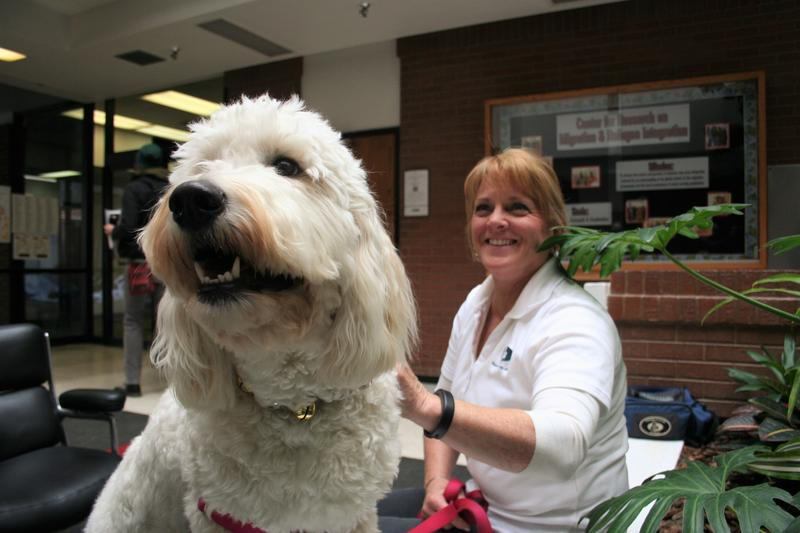Therapy Dogs of Utah dog handler, Jeannine Thalman and her golden doodle, Harper.