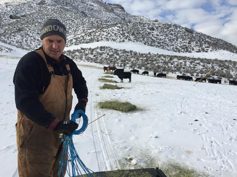 Rep. Logan Wilde, R-Morgan, feeds his cattle on a snowy day in December. Wilde beat a longtime incumbent for the District 53 seat last year, focusing his campaign on increasing local control.