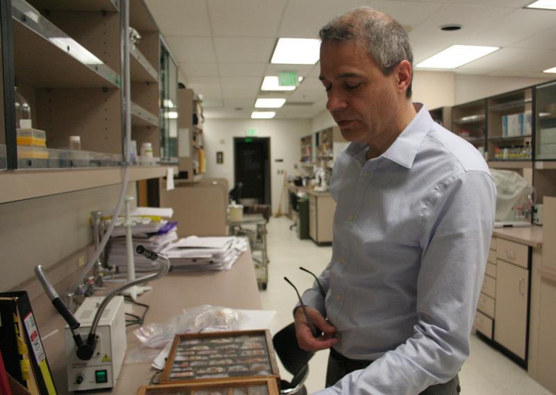 University of Utah Professor Michael McIntosh shows off a display of cone snail shells.