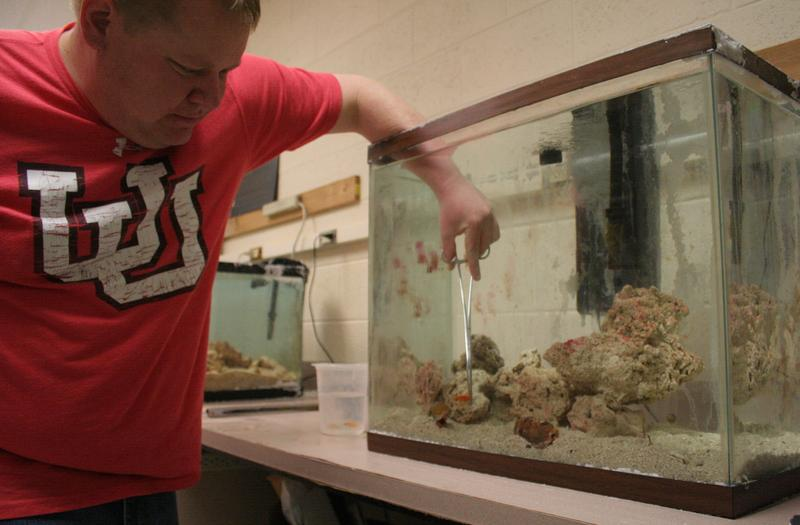 Lab Specialist Sean Christiansen holds a goldfish in front of a cone snail in the McIntosh lab.