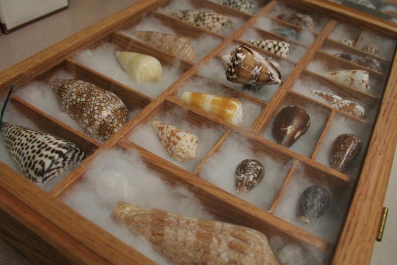 A collection of cone snails in the McIntosh lab.
