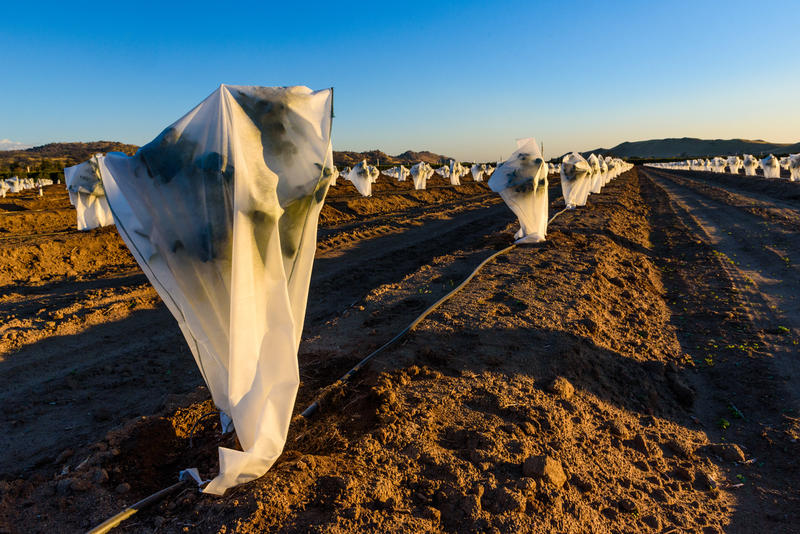 Gardeners and farmers sometimes resort to plastic to protect their plants from killing frosts. A new University of Utah paper traces the timing of frosts to Pacific winds.